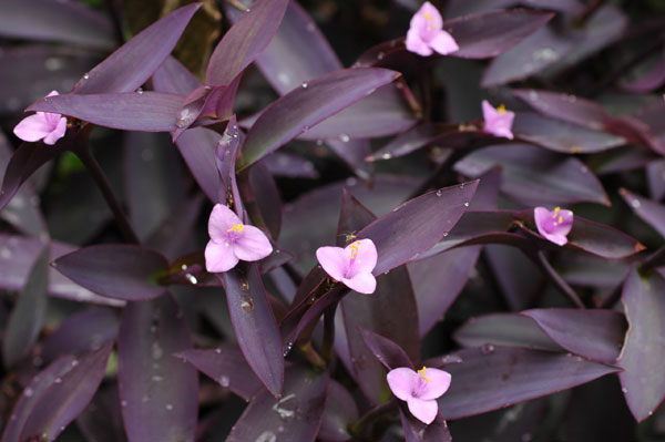 10 plantas que purificam o ar dentro de casa verde org 226 nico
